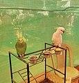Alva's Nudisiri bird show.jpg