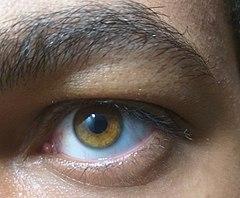 Aus was augen sagen blau-graue Was Augenfarben