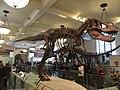 American Museum of Natural History - New York - USA - panoramio (5).jpg