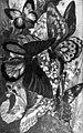 Americana 1920 Butterfly - Butterflies.jpg