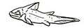 An examination of the Devonian fishes of Michigan fig-13-b-16.png