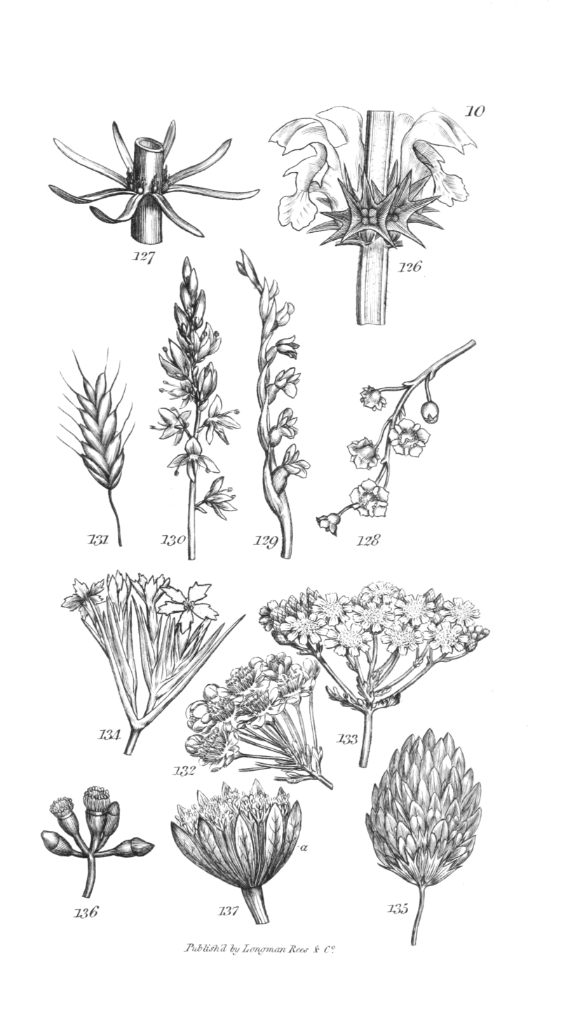 An introduction to physiological and systematical botany - Plate 10.png