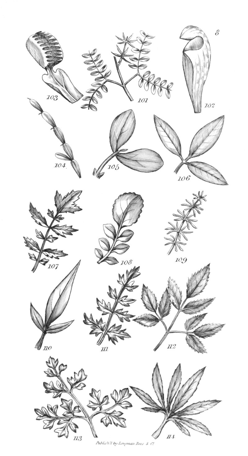 An introduction to physiological and systematical botany - Plate 8.png