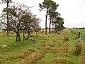 Ancient enclosure - geograph.org.uk - 1047929.jpg