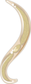 Ancylostoma duodenale larve (01).png