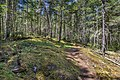 Anderson Cove Trail, East Sooke Regional Park, British Columbia, Canada 07.jpg