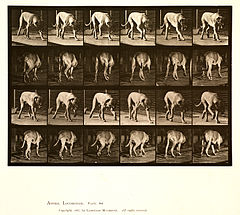 Animal locomotion. Plate 704 (Boston Public Library).jpg
