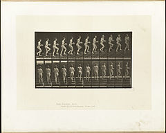 Animal locomotion. Plate 94 (Boston Public Library).jpg