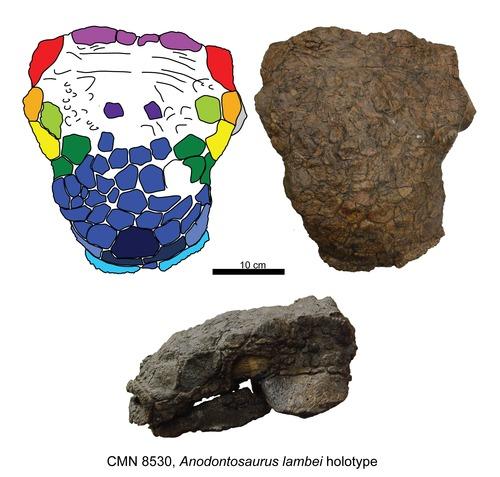 Anodontosaurus
