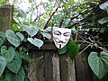 Anonymous on the fence.jpg