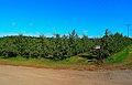 Apple Trees of Sunrise Orchards - panoramio.jpg