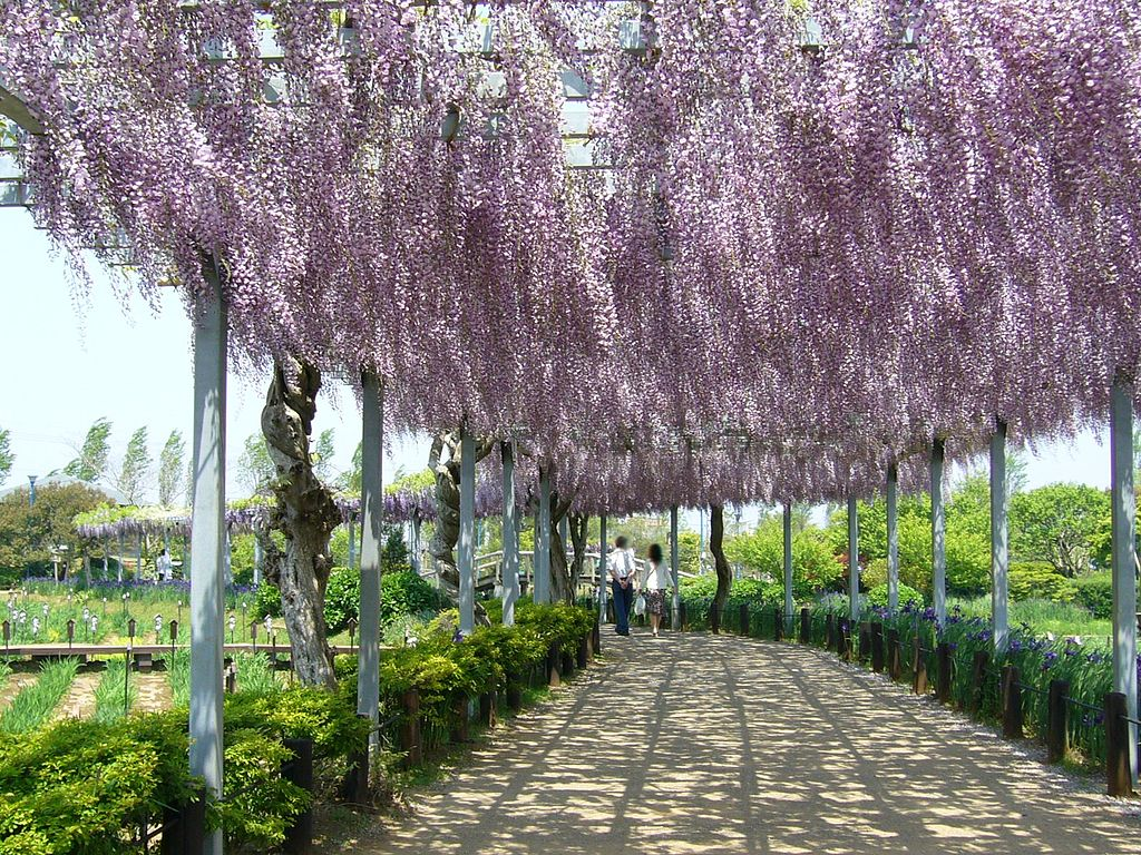 file aquatic plant garden wisteria trellis sawara katori city japan jpg wikimedia commons. Black Bedroom Furniture Sets. Home Design Ideas