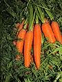 Arancione verdeIMG 0422.JPG