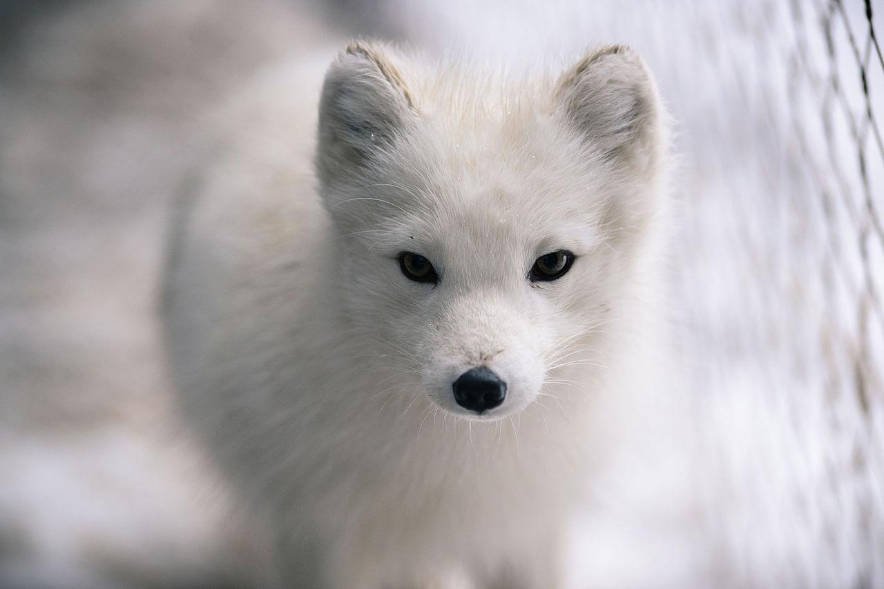 Arctic Animal Baby Bedding