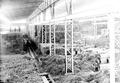 Armeestrohlager Maschinenhalle Landesausstellung - CH-BAR - 3238119.tif