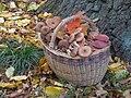 Armillaria mellea, 20 PA060287.jpg