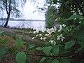 Aspbo naturreservat, Uppland.jpg