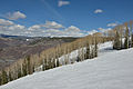Aspen Mountain aspen alley from Ruthies.jpg