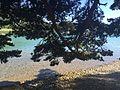 Au bord du Lac de Laffrey.jpg