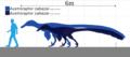 Austroraptor cabazai size chart.png