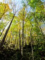 Autum Trees Black Mountain Campground Pisgah Nat Forest NC 4311 (37894461936).jpg