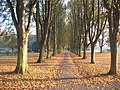 Autumnal Avenue - geograph.org.uk - 1050890.jpg