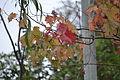 Autumnleaveswestcalder2014.JPG