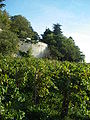 Avignon - Vignes intra muros.JPG