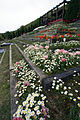 Awaji yumebutai07s3200.jpg