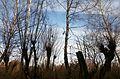 Bürmooser Moor 5.jpg