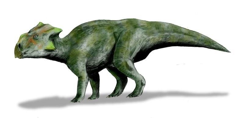 Bagaceratops BW