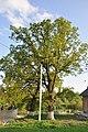 Baikivtsi-Duby-brativ-Mysuliv-15056360.jpg