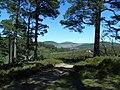 Ballochbuie Forest - geograph.org.uk - 1328326.jpg
