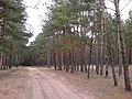 Baltiyskiy rayon, Konigsberg, Kaliningradskaya oblast', Russia - panoramio (35).jpg