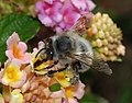 Bee March 2008-13.jpg