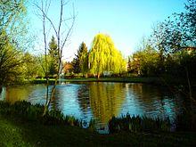 Schwimmbad Bellheim bellheim