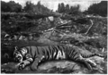 Bengal Dacoits and Tigers 167.tif