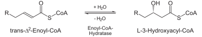 Beta-Oxidation2.svg