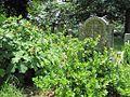 Bethlehem Cemetery Memphis TN 10.jpg