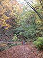 Binger-Wald01.JPG