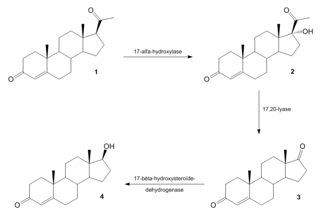 Biosynthese van testosteron