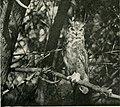 Bird-lore (1920) (14564061039).jpg
