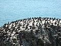 Bird Island nature reserve, Qinghai Lake - panoramio (1).jpg