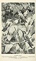 Bird notes (1902) (14747532054).jpg