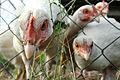 Birdsies 236.jpg