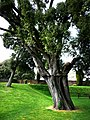 Bishop's Palace Garden - geograph.org.uk - 1288192.jpg