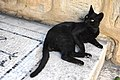 Black cat at Jacob's Well, Nablus 005 - Aug 2011.jpg