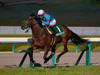 Blast Onepiece Japanese-bred Thoroughbred racehorse