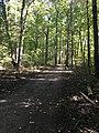 Blendon Woods Metro Park October 2018 16.jpg