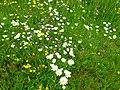 Blumenwiese-.JPG